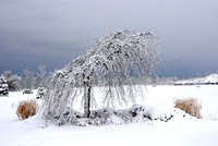 Winter in Ajax Ontario, 2008